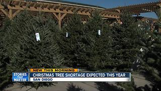 Christmas tree shortage hits San Diego - Video