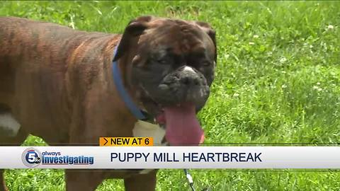 Puppy mill heartbreak