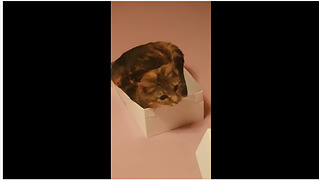 Funny cat awkwardly squeezes into very small box - Video