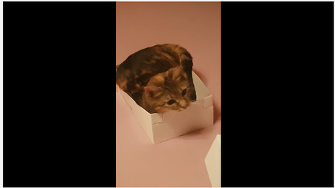 Funny cat awkwardly squeezes into very small box