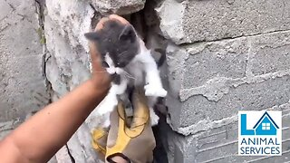 Animal rescuers save tiny kitten stuck between cement walls