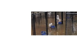 Animal Rescue Shelter Flooded When Dam Opened to Drain Harvey's Flood Waters - Video