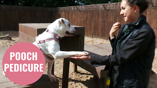 Dog enjoys daily foot spa with her canine carer