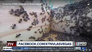 Students stung in winter bee attack - Video
