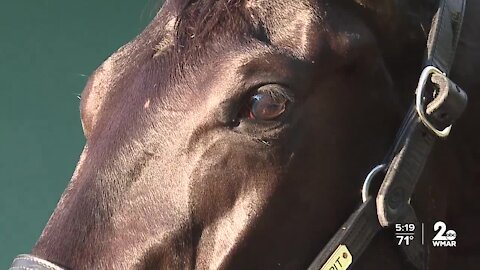Kentucky Derby Winner cleared to run in the Preakness
