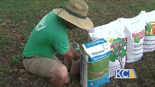 Why won't grass grow under my shade trees? - Video