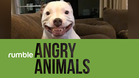 Ironically, this compilation of angry animals with definitely make you smile!