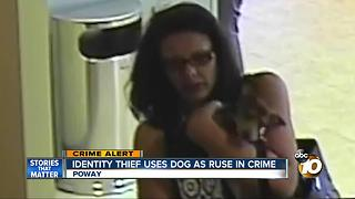 Identity thief uses dog as a ruse in crime - Video