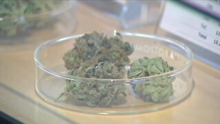 Denver to consider marijuana delivery and hospitality proposal