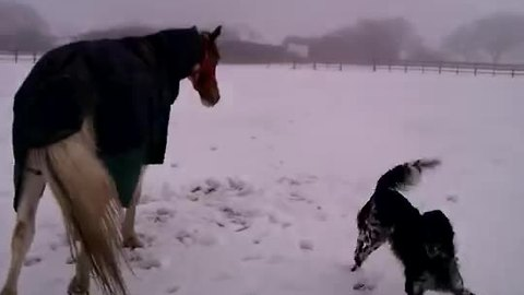 Horse and dog play together in the snow