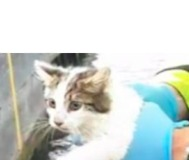 Kitten Stuck in River Shannon Lock Rescued After Being Spotted by Keen-Eyed Teen
