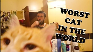 He Is Troy, The Worst Cat In The World  - Video