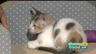 Celebrate National Cat Day - Video