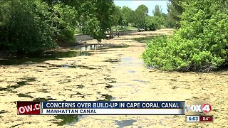 Scum build-up in canal concerns Cape Coral neighbors