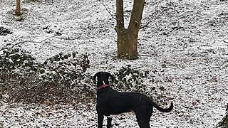 Dog loves his new ball game in the snow