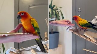 How to train your parrot using a target & clicker