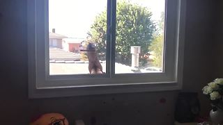 Intruding Squirrel Jumps After Being Caught Stealing From Bird Feeder