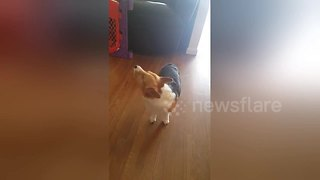 Baby and dog enjoy howling together - Video