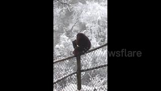 Cheeky wild monkey steals tourist's wallet - Video