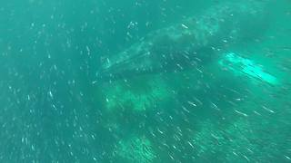 Humpback Whales Appear Under Kayaks Off East Newfoundland - Video