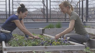 Dream Jobs: Rooftop Farmer