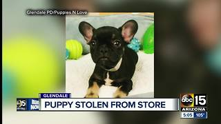 French bulldog stolen from store at a Glendale mall - Video