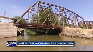 More West Nile mosquitoes in Canyon County - Video