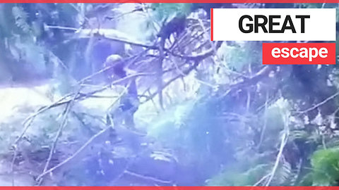 Biker almost crushed after huge branch falls from tree