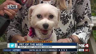 Pet of the week: Leila - Video