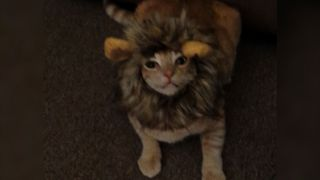 12 Animals With Love Hate Relationships With Halloween Costumes - Video