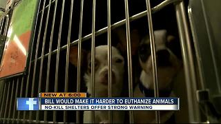 Florida bill seeks to make it harder for shelters to euthanize animals - Video