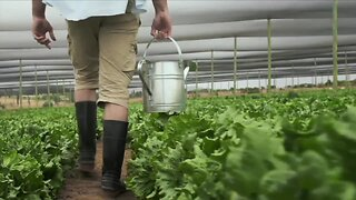 Local couple helps revive local farm business during cold winter
