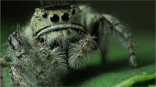Microscopic Arachnids Are Likely Living Inside Your Pores