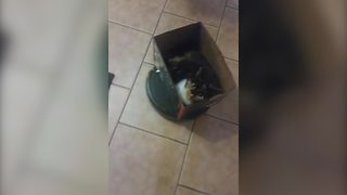 """Cat Riding On Roomba Vacuum Cleaner In Style"""