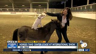 Dally and Spanky at Del Mar International Horse Show - Video