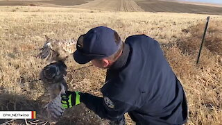 Owl Rescued After Getting Caught In Barbed Wire