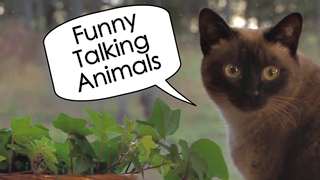 Funny Talking Animals - Video