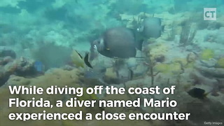 Diver Gets Too Close to an Octopus, Camera Catches Aftermath - Video