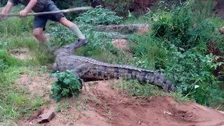 Crocodile attacks man - Video