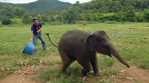 Incredibly Rare Footage Shows Playful Six-Month-Old Baby Elephant Caught Laughing