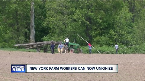Appellate court: New York farmworkers have right to unionize