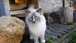 Bewildered cat experiences the outdoors for the first time - Video
