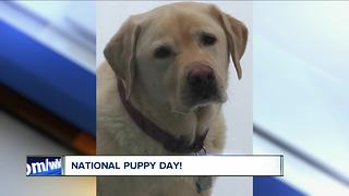National Puppy Day - Video