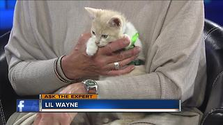 Expert talks alternatives to declawing your cat