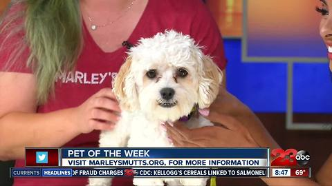 Meet our 23ABC Pet of the Week, Toodles!