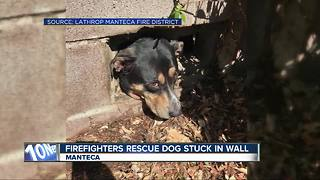 Dog stuck in wall rescued by firefighters
