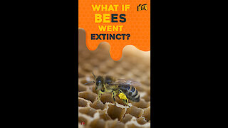 What If Bees Went Extinct ? *
