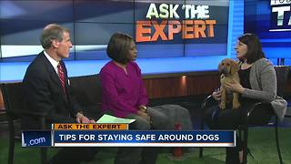 Ask the Expert: Staying safe around dogs - Video