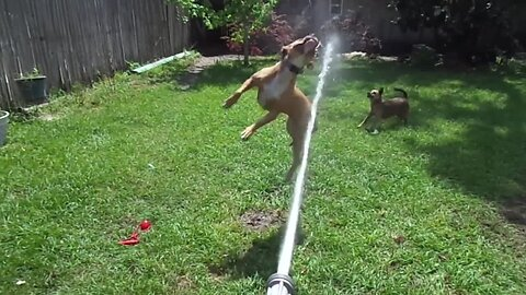 Dogs vs Water Hose