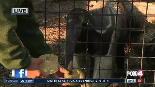 Naples Zoo offers up-close wild encounters - 8:30am Live Report - Video